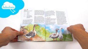 animali di corte - libri sulla natura